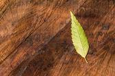 Autumn leaf on wooden wood log surface — Foto de Stock
