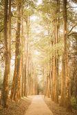 Path in the park vintage retro — Stock Photo