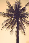 Coconut palm tree silhouette sunset vintage retro — Stock Photo
