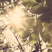 Листья солнечного света — Стоковое фото