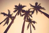 Coconut palm tree sunset silhouette vintage retro — Stock Photo