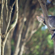Wild cat. kitten sits on a tree branch in the forest. — Stock Photo #61484301
