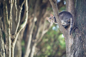Wild cat. kitten sits on a tree branch in the forest. — Stock Photo