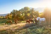 Grazing horses in a meadow. — Stock Photo