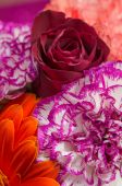 Colorful of flowers close up — Stock Photo