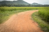 Country road in rice field — Stock Photo