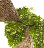 Green isolated tree from a different view — Stock Photo