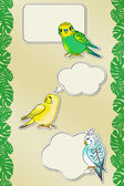 Funny Budgies Messages (with the Path) — Stock Photo