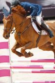 Rider on the horse during  Global Champions Tour of Spain — Stok fotoğraf