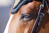 Horse  during Global Champions Tour of Spain — Stock Photo