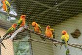 Little parrots in nature park — Stock Photo