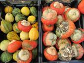 Colorful pumpkins collection on the market — Stock Photo