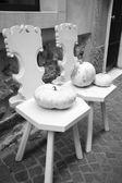Two chairs and white pumpkins — Stock Photo