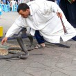 Marrakech, Morocco - April 20th of 2014: Snake charmer facing egyptian cobras at Djemaa el Fna square, a place recognized by UNESCO as a masterpiece of the Oral and Intangible Heritage of Humanity — Stock Photo #52411217