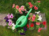 Bright garden tools — Stock Photo