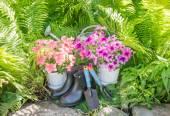 Garden tools and flowers. The gardener set — Stock Photo