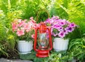 Old kerosene lamp and petunias in the garden — Stockfoto