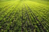 Campo di erba — Foto Stock