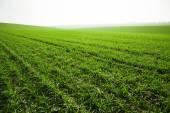Foggy meadow, field — Stock Photo