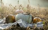 Dýňová pole s různými druh dýně na podzimní slunečný den — Stock fotografie