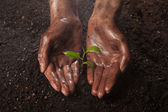 Hands holding a green plan — Stockfoto