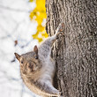 Curious squirrel on tree trunk macro — Stock Photo #58163679
