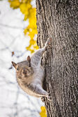 Curious squirrel on tree trunk macro — Stock Photo