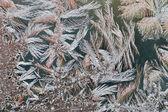 Frost pattern formation on house window macro — Stock Photo