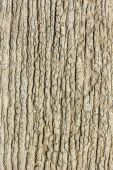Old wood cracked texture background. — Stock Photo