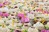Lotus para adoración. — Foto de Stock