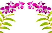 Thai orchid flowers. — Stockfoto