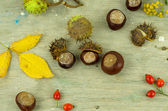 Autumn chestnuts and arrow — Stock Photo