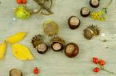 Autumn chestnuts and arrow — Foto Stock