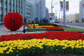 Flower beds on the street in the city of Minsk, Belarus — Stock Photo