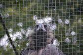 Dravý pták — Stock fotografie