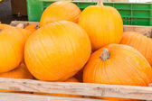 Pumpkins harvest in wooden bowl at market — Stock Photo