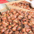 Delicious group of chestnuts fruits — Stock Photo #59590081