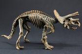 Triceratops fossil dinosaur skeleton model toy — Stok fotoğraf