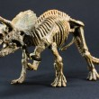 Triceratops fossil dinosaur skeleton model toy — Stock Photo #65694643