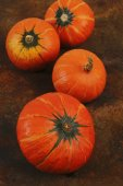 Ripe pumpkin — Stock Photo