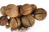 Castor bean and Cerbera odollam seed  — Stock Photo