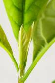 Young avocado plant growing — Stock Photo
