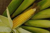 Yellow corn on sack background — Stock Photo