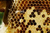 Honeycomb on wood — Stockfoto