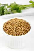 Coriander seeds in a cup  — Stok fotoğraf