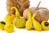 Pattypan,pumpkin and squash on white — Stock Photo
