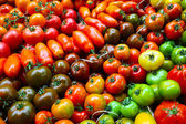Colorful variety of tomatoes — Stock Photo