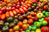 Colorful variety of tomatoes — Stock fotografie