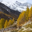 Autumn colors forest and snow mountain peaks in Swiss Alps — Stock Photo #52360819