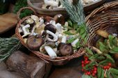 Basket of wild fresh forest mushrooms — Stock Photo